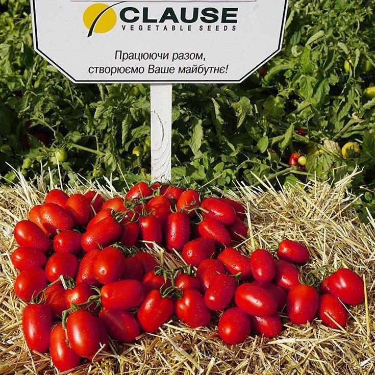Семена томата Пьетраросса F1 (1000 сем.) Clause