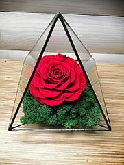 Флорариум Долговечная Роза в колбе пирамида,композиция с стабилизированными растениями(мхом),