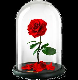 Розы в колбе долгосвежие