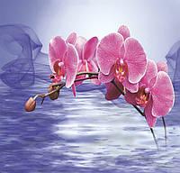 ЗД Фотообои Орхидея над водой  арт. 11274422331