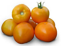 Семена томата детерминантного АЙСАН (KS 18) F1(Kitano) 1000с, фото 1