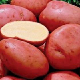 Среднеспелые сорта картофеля