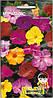 Семена цветов Мирабилис (ночная красавица) 2г (Малахiт Подiлля), фото 2