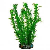 Аквариумное растение Aquatic Plants, 19 см х 8 шт/уп (1969)