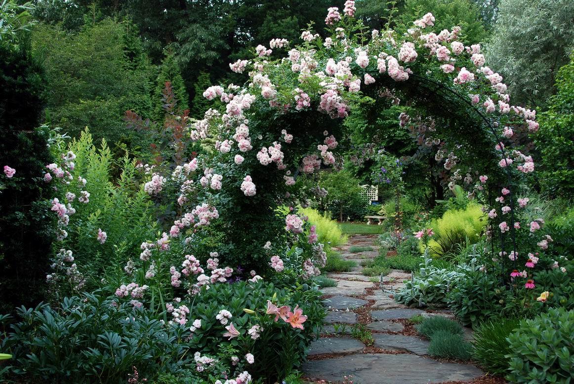 Саженцы плетистых роз Венуста Пендула