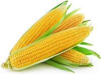 DKC 3050 (ДКС 3050) насіння кукурудзи Monsanto