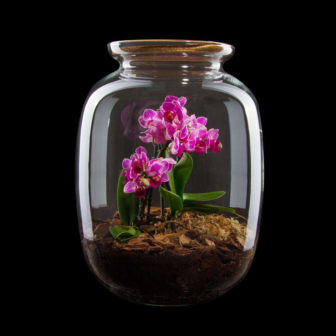 Оригинальный декоративный флорариум в банке с орхидеями Ф10