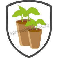 Торфяные горшки для выращивания рассады