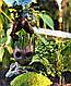 Оригінальний флораріум в банку з малюком Грутом Ф1, фото 3