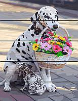 Картина по номерам на дереве 40*50см. Мама - Далматинец Rainbow Art GXT31012 в подарочной коробке