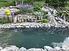 Изготовление плавательных прудов, экопруд, биопруд, пруд с растениями, фото 3