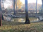 Изготовление плавательных прудов, экопруд, биопруд, пруд с растениями, фото 6