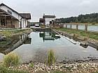 Изготовление плавательных прудов, экопруд, биопруд, пруд с растениями, фото 7