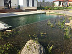 Изготовление плавательных прудов, экопруд, биопруд, пруд с растениями, фото 8