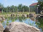 Изготовление плавательных прудов, экопруд, биопруд, пруд с растениями, фото 9
