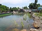 Изготовление плавательных прудов, экопруд, биопруд, пруд с растениями, фото 10