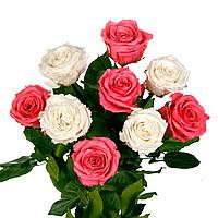 Букет из 9 долгосвежих роз FLORICH БЕЛЫЙ И РОЗОВЫЙ 7 карат короткий стебель