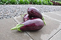 ЛЕЙРЕ F1 / LEIRE F1 - Баклажан, Rijk Zwaan, 100 семян