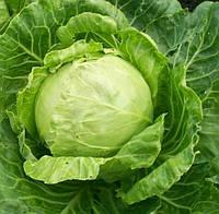 Купить Семена капусты белокачянной Тріперіо F1