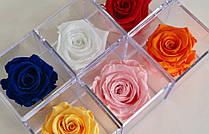 Стабилизированный бутон роза в колбе Lerosh - Standart,  Малиновый