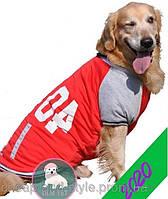 Куртка-Бомбер для собак средних и крупных пород. Одежда для собак.