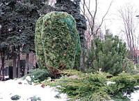 8 советов по защите растений зимой