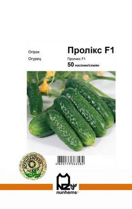 Семена Огурец самоопыляемый Проликс F1 50 сем Nunhems 2607, фото 2