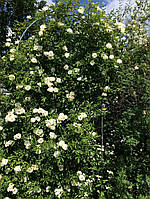 Опора для растений Шпалера-арка 2700*1000 (д16)