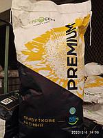 Гібрид соняшника PEGAS (ns 6341)