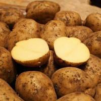Картофель Белмонда среднеранний сорт приспосабливается к любой почве и климату Германия фракция 25 - 55 мм