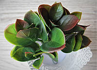 Ветка с листьями - 12 грн диаметр розетки 10 см, высота листьев 8 см.