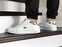 Кросівки чоловічі в стилі  Lacoste  білі  ТОП якість