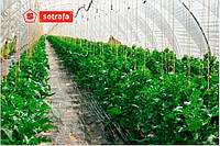 Теплична плівка SOTRAFA