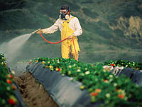 Как применять гербициды сплошного действия (глифосаты)?