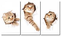 Модульна картина Грайливі кошенята Код: W1520