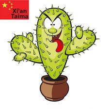Ароматизатор Cactus XIan Taima (кактус)