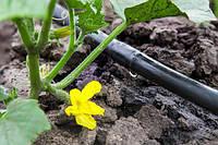 Як організувати полив в теплиці і які системи можна використовувати