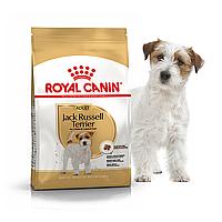 Royal Canin Jack Russell Adult (Роял Канин Джек Рассел) корм для взрослых собак с 10-месячного возраста 7.5 кг