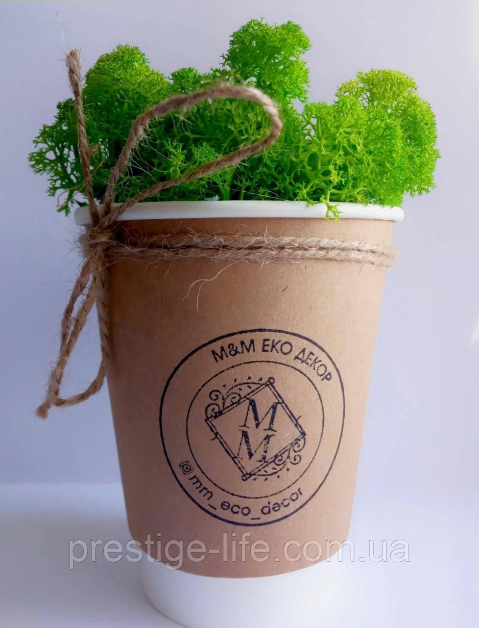 Мох в крафтовом стаканчике, стабилизированный мох, декор из мха, ягель