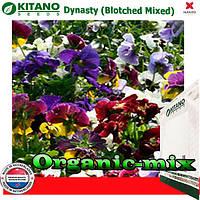 Фиалка Династия Blotched Mixed, 100 семян, ТМ KITANO SEEDS (Голландия)