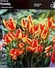 Тюльпан багатоквітковий Florette