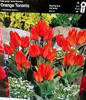 Тюльпан багатквітковий Orange Toronto