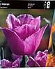 Тюльпан оторочений Blue Heron