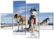 Модульна картина Собаки Сибірські Хаскі Код: W540