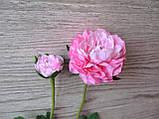 Рунункулюс (лютик) на стебле с бутоном нежно розовый, фото 3