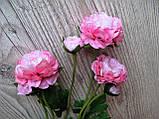 Рунункулюс (лютик) на стебле с бутоном нежно розовый, фото 2