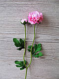 Рунункулюс (лютик) на стебле с бутоном нежно розовый, фото 6