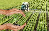 Чем можно заменить химические средства защиты растений?