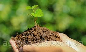 Средства защиты растений и период их разложения
