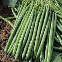 Семена фасоли спаржевой Пайк Clause 5 000 шт